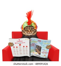 Funny cat at the hairdresser reading a magazine on white background. In a beauty salon.