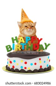 Funny cat with happy birthday cake, wearing a party hat, isolated on white background.