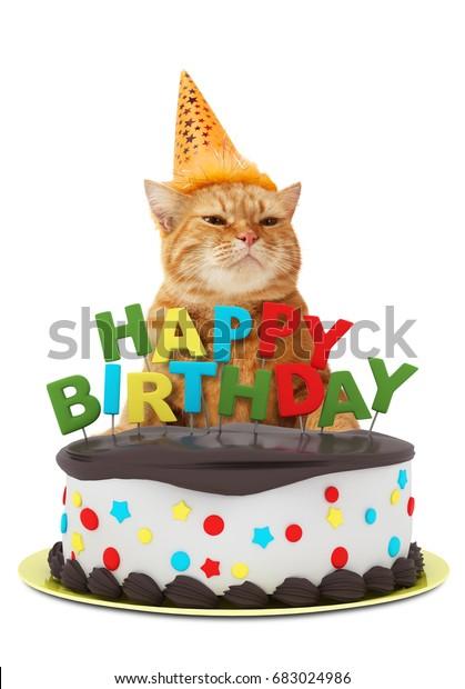 Strange Funny Cat Happy Birthday Cake Wearing Stock Photo Edit Now 683024986 Funny Birthday Cards Online Alyptdamsfinfo