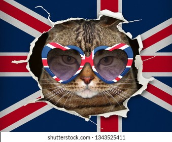 The funny cat in heart shaped sunglasses is looking up through hole in the paper flag of Great Britain.