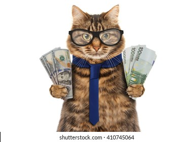 Funny cat is holding banknotes of Dollar and Euro. Business theme.