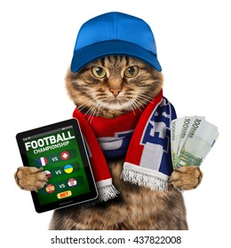 Funny cat is holding smartphone whith money and wearing a cap and football scarf of France. Betting online. Football theme.