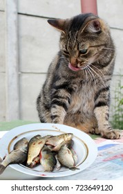 Funny cat looking at the fish and licking his chops.