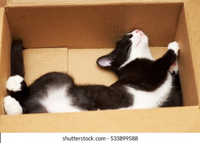 Funny cat lover boxes.