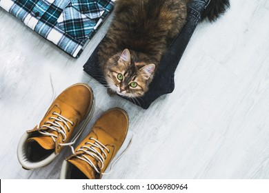 Funny cat lying on gray jeans and yellow work boots, flannel shirt. Top view. Travel concept.