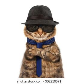 Funny cat - mafia boss