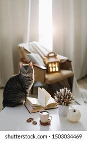 Hase Katze auf hellbraunem Hintergrund zu Hause. Gemütliches Flatlay von Bloggerin. Skandinavischer Stil, Mischkonzept. Innenausstattung des Herbstlebens
