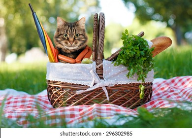 Funny cat on a picnic. Beautiful summer day