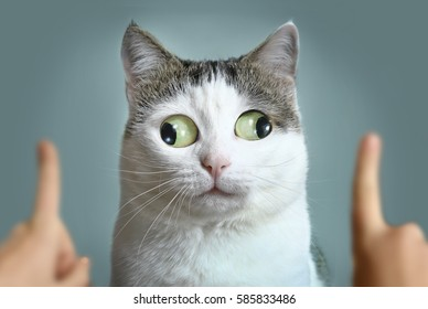 funny cat at ophtalmologist appointmet squinting following doctor fingers
