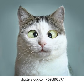 Funny Images Stock Photos Vectors Shutterstock See more ideas about funny photos, funny, photo. https www shutterstock com image photo funny cat ophthalmologist appointmet squinting close 598805597