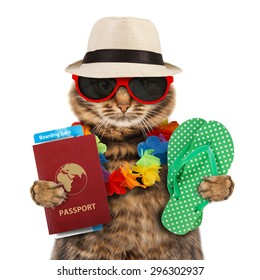 Funny cat with passport and airline ticket , isolated on white background