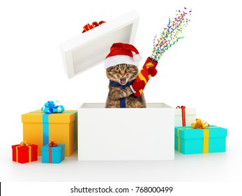 Funny cat with petard jump out of box. Christmas surprise.