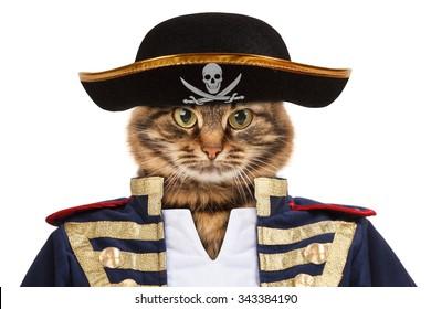 Funny cat - pirate
