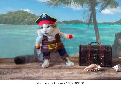 Funny cat in pirate costume on the seascape background