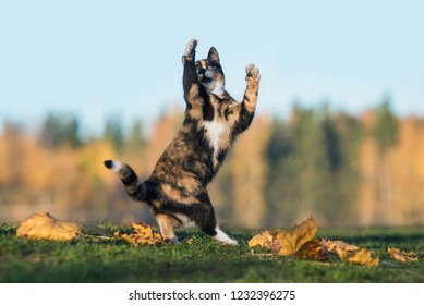 Funny cat playing in autumn