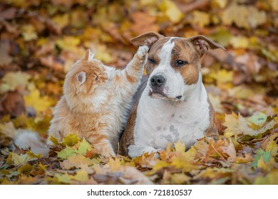 Funny cat playing with a dog in autumn