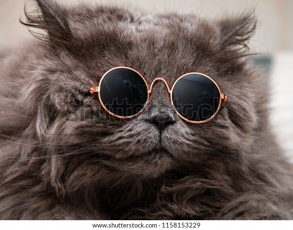 af78b68dd Funny Cat Round Sunglasses Closeup Stock Photo (Edit Now) 1158153229