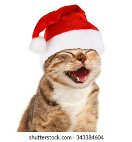 Funny cat in Santa Claus xmas red hat on white background