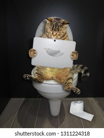 The funny cat  is sitting on the toilet bowl and staring at its laptop in the bathroom.