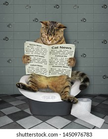 The funny cat  is sitting on the toilet bowl and reading a newspaper in the bathroom.