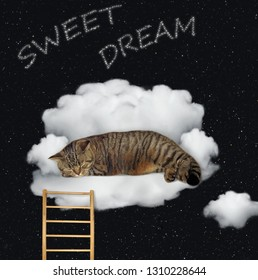 The funny cat is sleeping on the cloud. It looks like a sofa. Sweet dreams. Stars background.