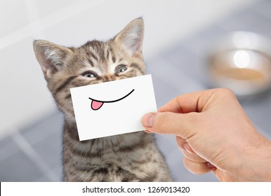 funny cat with smile and tongue on cardboard