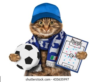 Funny cat with soccer ball and wearing a cap and football scarf of Italy on white background. He has a strategy of match. Football theme.
