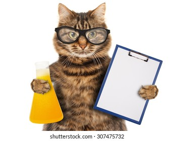 Funny cat is studying chemistry. It is holding bulb with liquid.