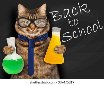 Funny cat is studying chemistry. It is holding bulbs with liquid on blackboard background. Back to school.