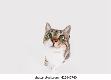 Funny cat Surprised  sitting and looking to camera isolated on black background.Close-up funny cat.