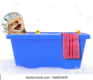 Funny cat is taking a bath in a colorful bathtub with toy duck.