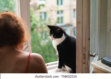 funny cat walks by the open window and under the supervision of the mistress.