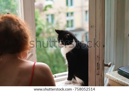 funny cat walks by open window の写真素材 今すぐ編集 758052514