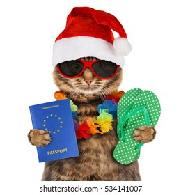 Funny cat is wearing a Christmas hat and holding passport and flip flops.