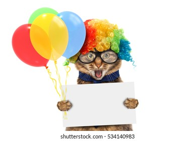 Funny cat is wearing a clown's costume and holding balloons. White label for text.