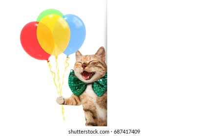 Funny cat is wearing a festive clothes and holding balloons. White label for text.