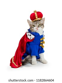 Funny cat wearing royal king Halloween costume isolated on a white background