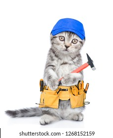 Funny cat worker in blue cap with toolbelt and hammer.  Isolated on white background