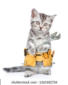 Funny cat worker with toolbelt and adjustable wrench.  Isolated on white background