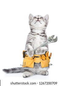 Funny cat worker with toolbelt and adjustable wrench looking up.  Isolated on white background