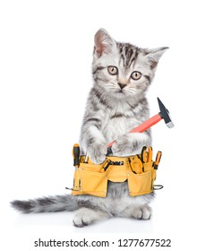 Funny cat worker with toolbelt and hammer.  Isolated on white background
