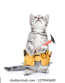 Funny cat worker with toolbelt and hammer looking up.  Isolated on white background