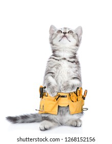Funny cat worker with toolbelt looking up.  Isolated on white background