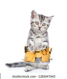 Funny cat worker with toolbelt looking at camera.  Isolated on white background