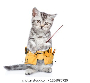 Funny cat worker with toolbelt pointing on empty space.  Isolated on white background