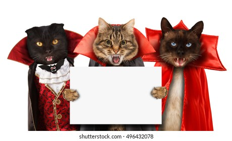 Funny cats are celebrating a halloween and wearing a suit of vampire Three cats with open mouths. Cat is holding blank sheet on white background.