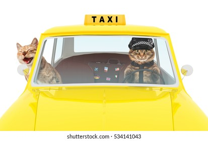 Funny cats are driving on a yellow cab. Taxi car with driver and passenger.