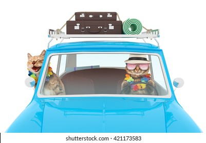Funny cats are going on vacation in a car. Blue vintage car with bags on a roof.
