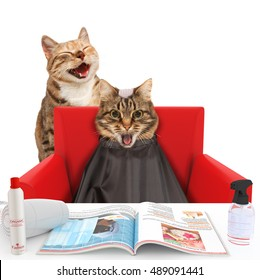 Funny cats at the hairdresser on the white background. The hairdresser is making a mistake. Cat with the bald head.