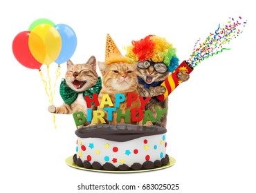 Funny cats with happy birthday cake. They are wearing a party hat, isolated on white background.